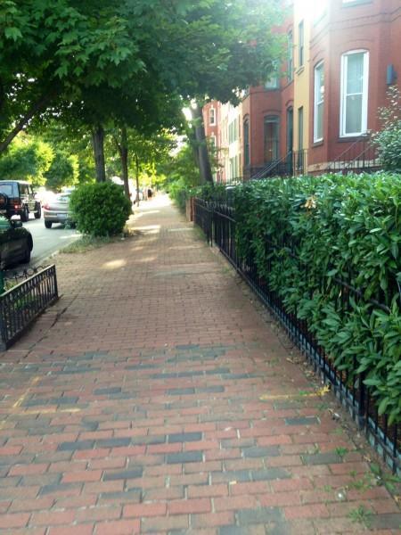 Sunny, lush city streets — they make me happy anywhere. This one's in D.C.